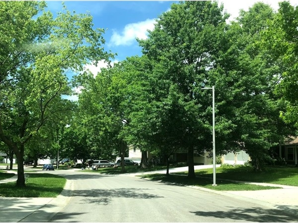 The green trees at Brittany Place give a fresh and relaxing feel in the neighborhood