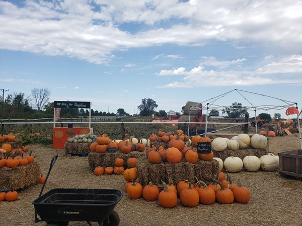 Our own pumpkin patch with a mini train, games and plenty of pumpkins