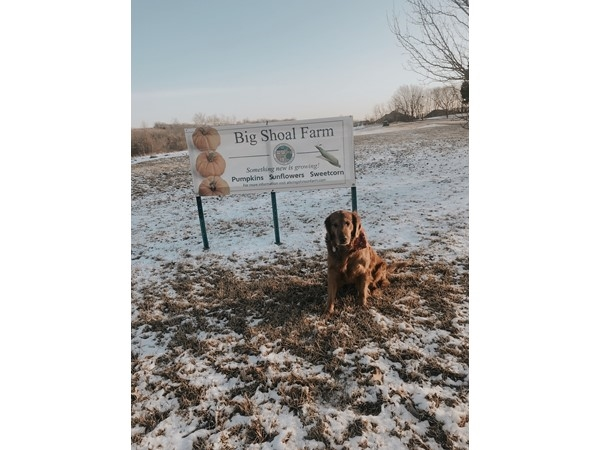 National Historic Big Shoal Farm in Gladstone Missouri. Diego the Golden Retriever by the sign