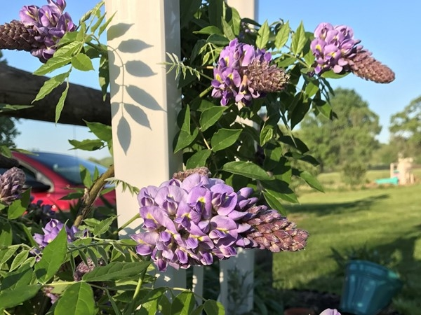 Pretty flowers in the country