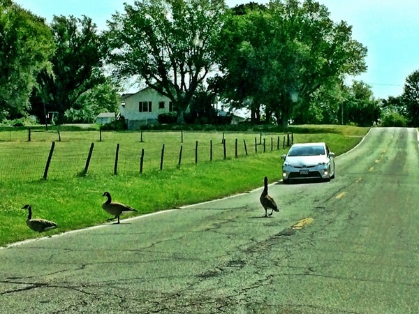Traffic backup in rural Clay County