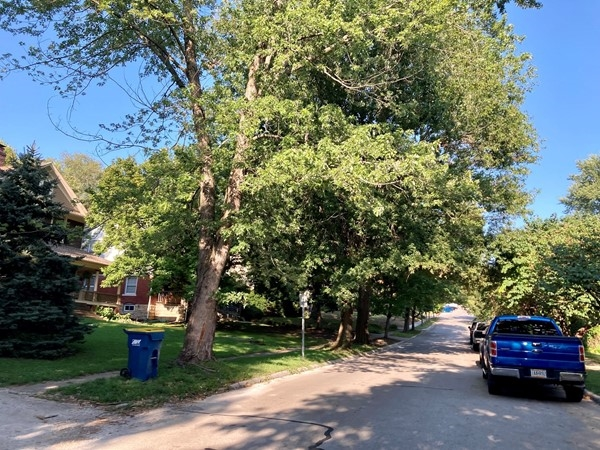 Old trees line the streets in Wilson's Addition near William Jewell and Downtown Liberty