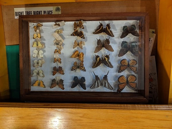 Native butterfly display at Martha Lafite Thompson Nature Sanctuary