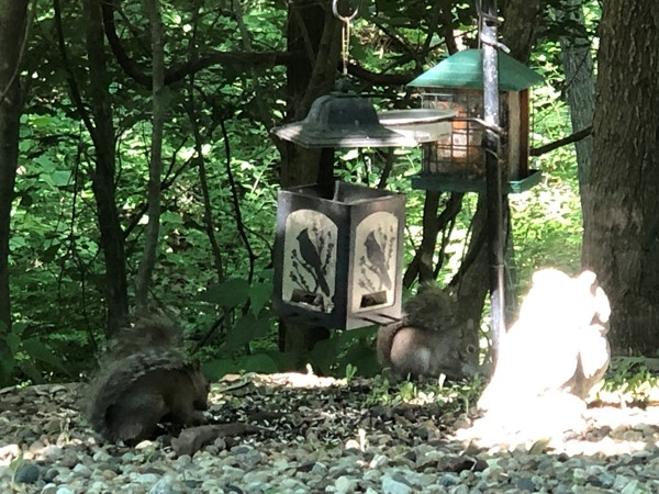 Look who opened the bird feeder...These squirrels are very spoiled and aggressive