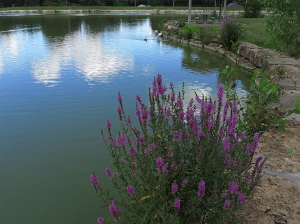 Tranquil, lovely South Lake Park - a neighborhood gem in central Overland Park