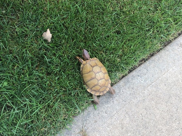 This little guy is getting out of the street where it is safe