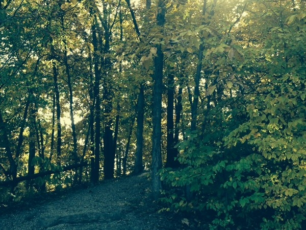 The sun peeking through the leaves on a Riss Lake trail walk to the lake.