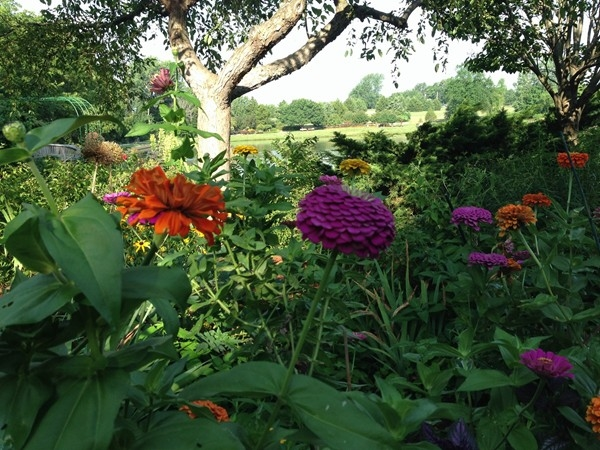 The Overland Park Arboretum never disappoints!