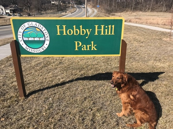 Diego the Golden Retriever visits Hobby Hill Park