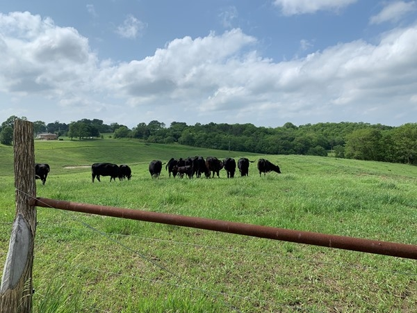 Cow pasture between Weston and Platte City