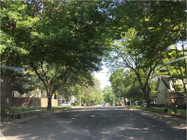 Driving down Brooktree Lane in spring
