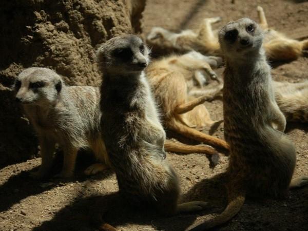 Kansas City Zoo. Are you talking to me?