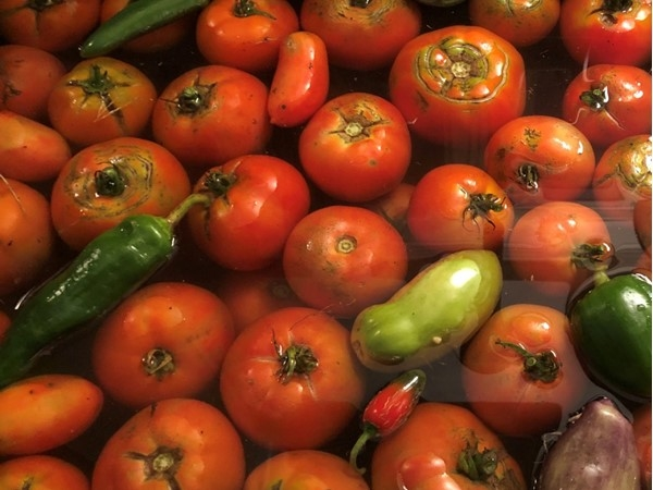 The gorgeous fruits of our labor in our gorgeous garden. Tomato soup, salsa and salads for fall