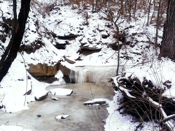 A winter scene from one of Gladstone's parks