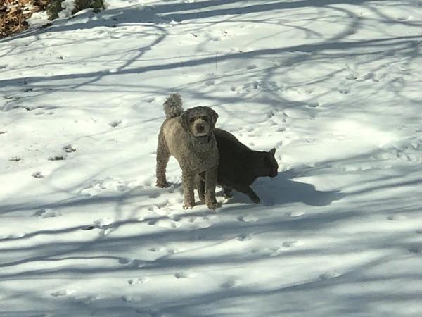 Best fur baby friends in gorgeous Hills of Oakwood