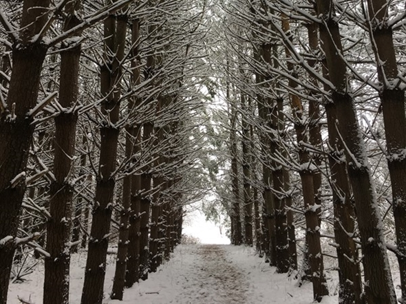 This is one of my favorite parts of Burr Oak Wood Nature Center. It's especially beautiful with snow