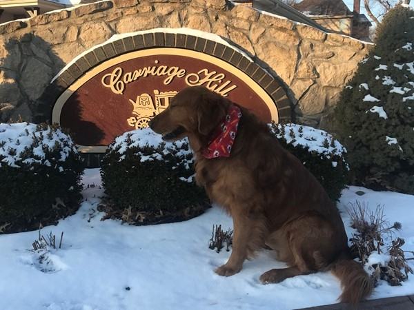 Find homes in Carriage Hills with Diego the golden.