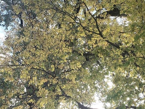 Fall color at Platte Landing Park