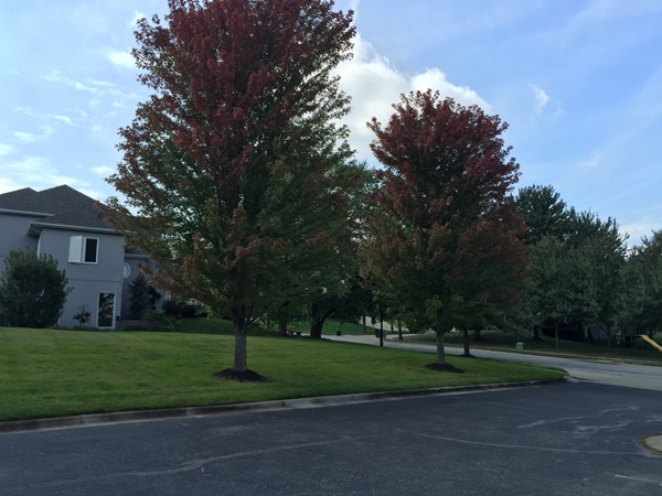 The trees starting to change colors at The Fairways in the fall