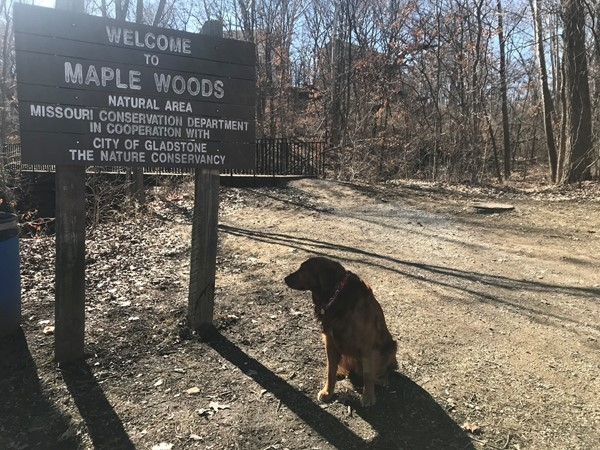 Diego visits Maple Woods Natural Area