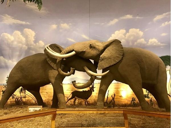 Elephant love - Cabella's