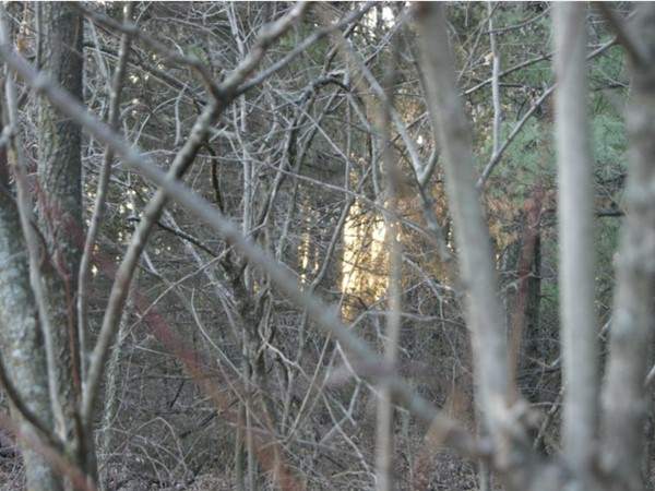 Sunset through the trees in James A Reed Memorial Wildlife Area