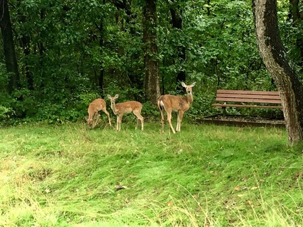 The weather is perfect to get out and enjoy watching the wildlife at Burr Oaks