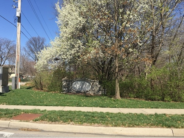 Blooming trees in Canterbury South