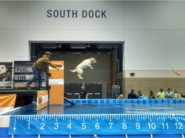 Dock dogs competition at Kansas City Sport Show - Bartle Hall