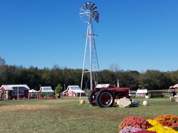 Beautiful scenery and attractions for all at Fun Farm Pumpkin Patch