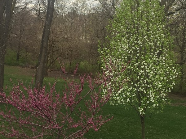 The beautiful colors of spring are arriving in Brentwood