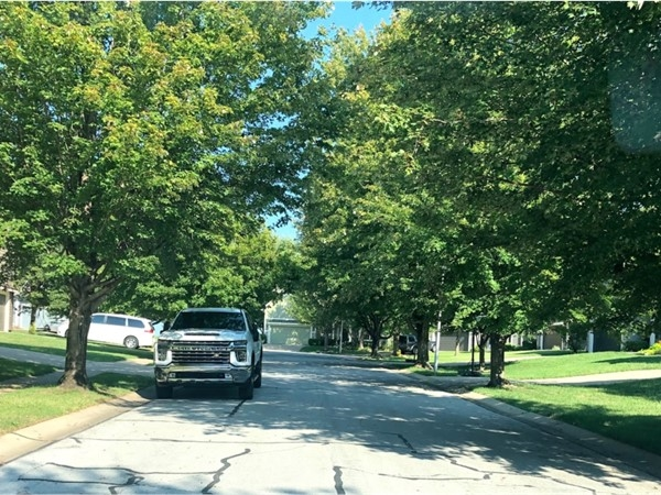 The tree-studded neighborhood of The Reserve at Heritage
