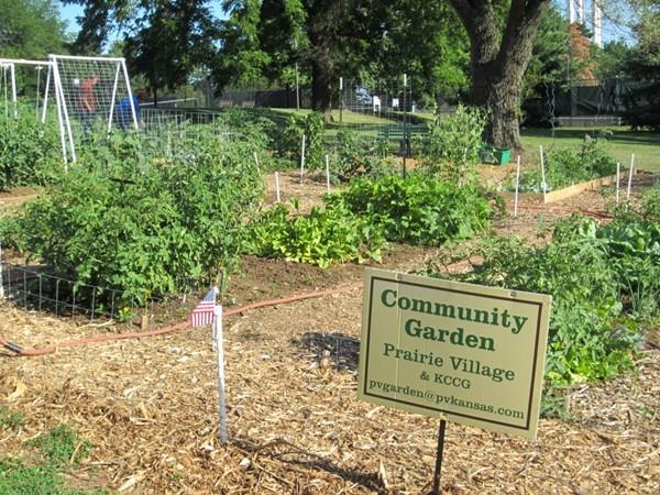 Community Gardening at Harmon Park