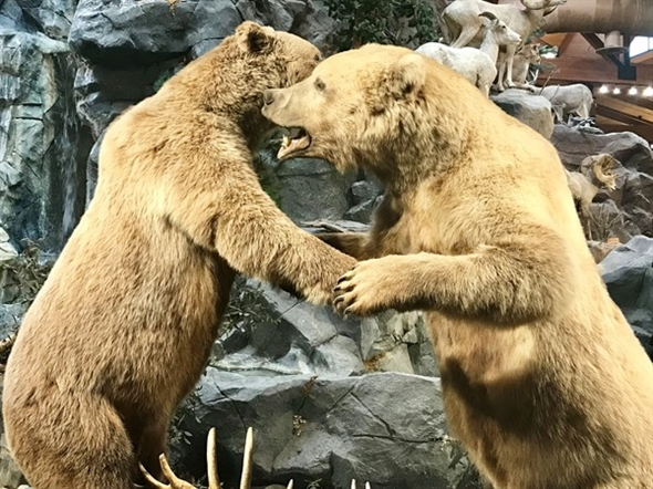 Everyone needs a bear hug - Cabella's