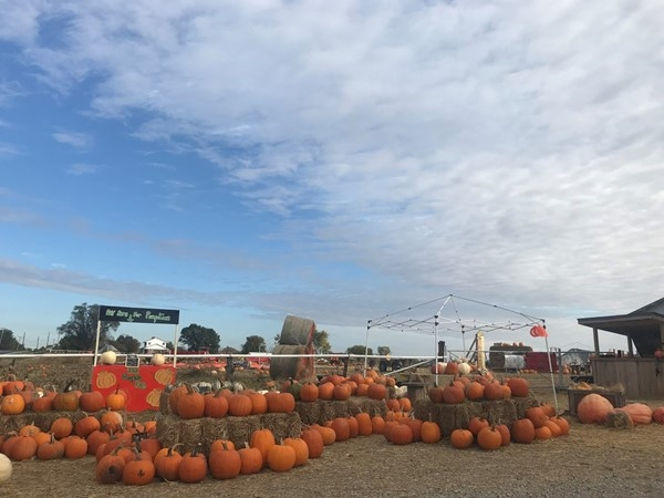 The Pumpkin Pad in Grain Valley is the perfect place to take your little ones every fall