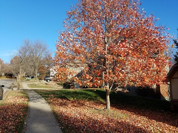 So many beautiful trees in Estates of Northwood Hills!  I really enjoyed my autumn walk