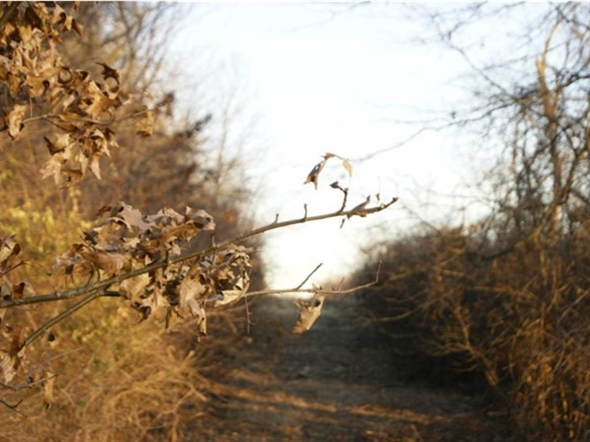 Enjoy natural beauty at James A Reed Memorial Wildlife Area. This is a trail behind Coot Lake