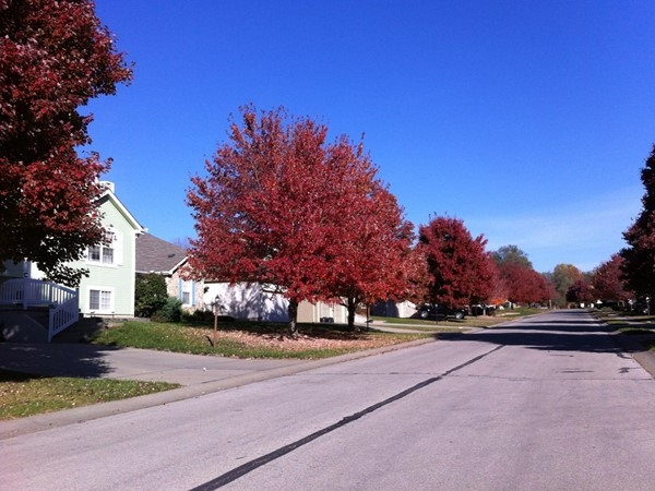 Wonderful fall colors in the Maples of Woodland Subdivision in Lansing