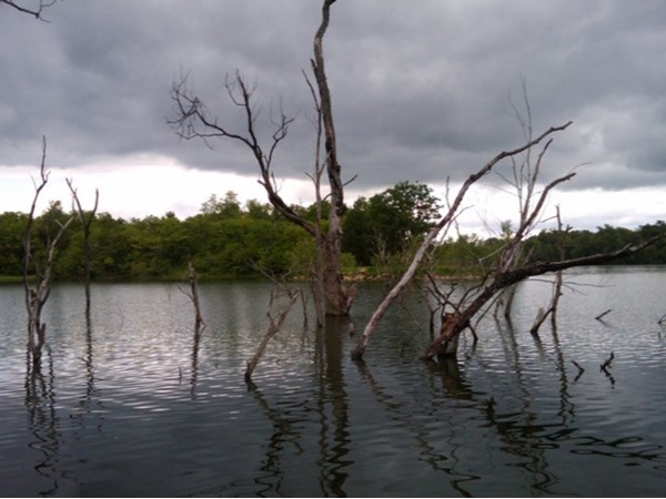 Fishing on Lake Remembrance. Treed areas are a great habitat for local fish