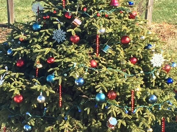 Each tree on the Kearney Festival Grounds is decorated for the Mayor's Christmas Tree Walk