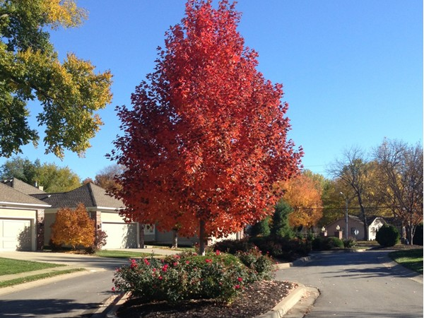Beautiful in Wynbrick for the fall.