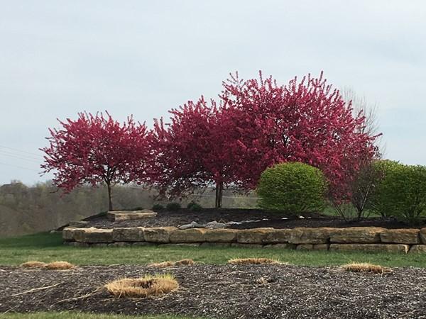 Spring has sprung in Seven Bridges