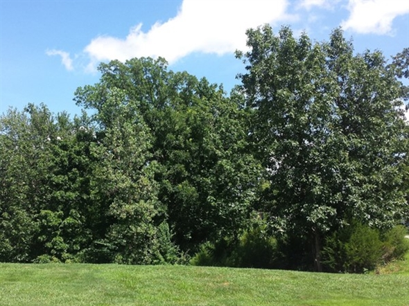 There are a lot of wooded areas around Green Oaks