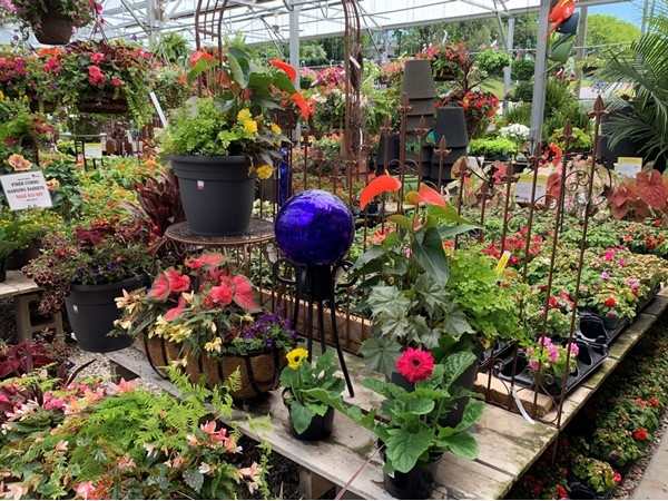 Family Tree Nursery - Annual plants