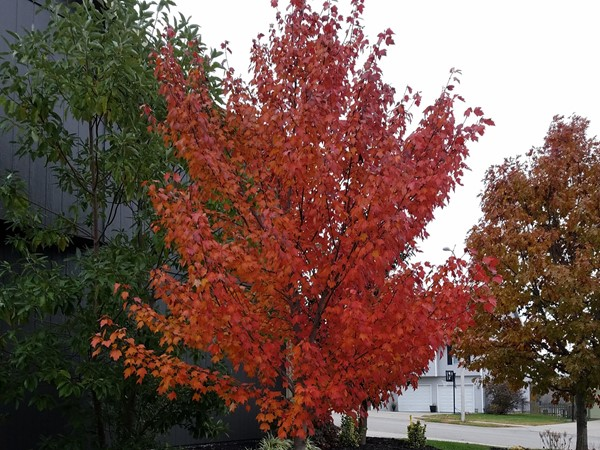 Autumn flame in Somerbrook