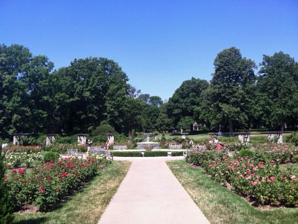 Enjoy The Rose Garden At Loose Park