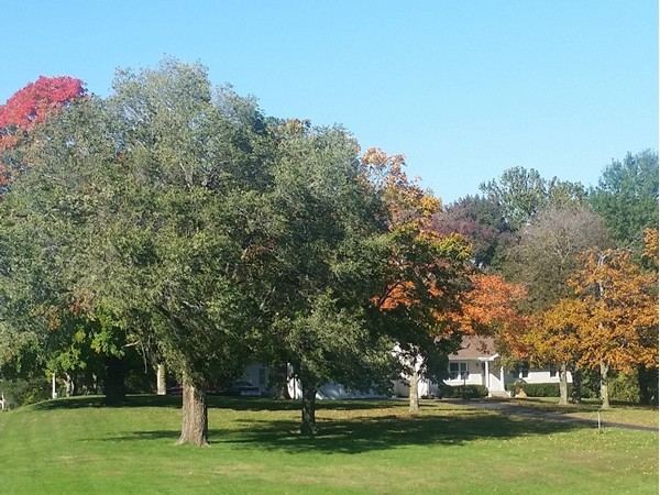 One of my favorite yards on 20 highway during the fall