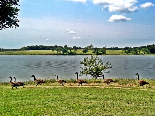 A round at Smithville's Paradise Pointe Golf Course includes wildlife and beautiful scenery