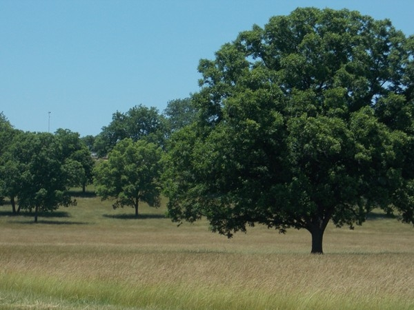 Beautiful pecan grove near LaCygne Lake and Wildlife Park in Linn County