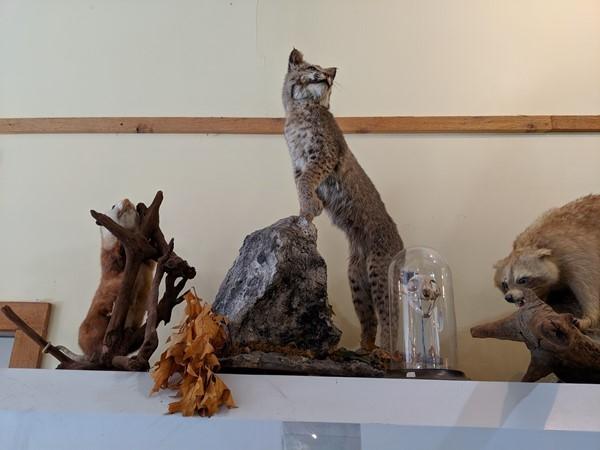 Taxidermy display at Martha Lafite Thompson Nature Sanctuary
